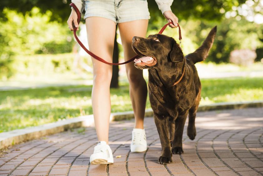 GPS Ortung für das Spazieren mit Hunden verwenden - GPS-Ortung für das Spazieren mit Ihren Hunden verwenden